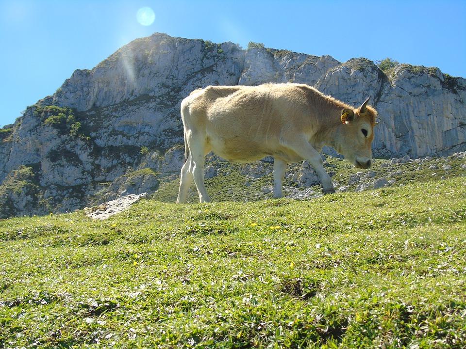 fauna picos de europa viaje en verano